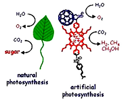 Natural vs Artificial Photosynthesis: image via Argonne National Laboratory