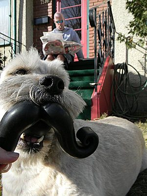 Humanga Stache Dog Toy (customer action shot): via Think Geek