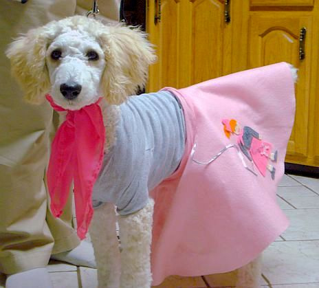 Poodle in people skirt: © Sakuako Kitsa