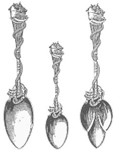 Re-Designed Salem Witch Spoon (1892)