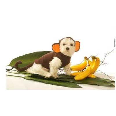 I did not know that monkeys ate bananas. I think I'd rather dress as a meat eater.