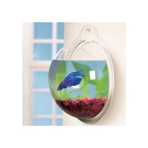 Fish Tank Ideas On Pinterest Tanks Aquarium And