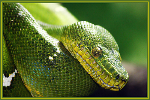 Snake Venim Facial