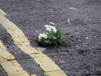 via Flickr user thepotholegardener: his first pothole garden