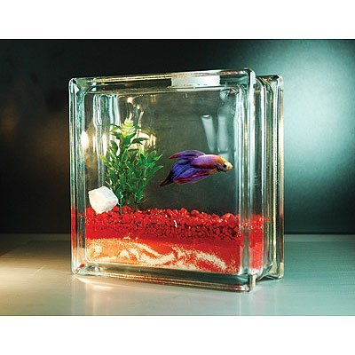 Fishy mother 39 s day gifts and the coolest fish bowls too for Betta fish bowl ideas