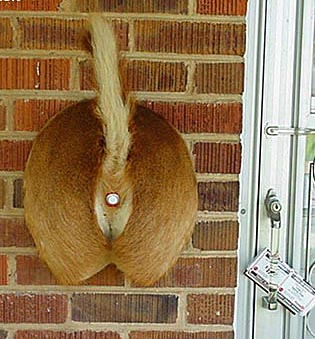 Deer Butt Doorbell