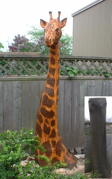 Giraffe - Carved from 7 ft. Tall Ash Tree