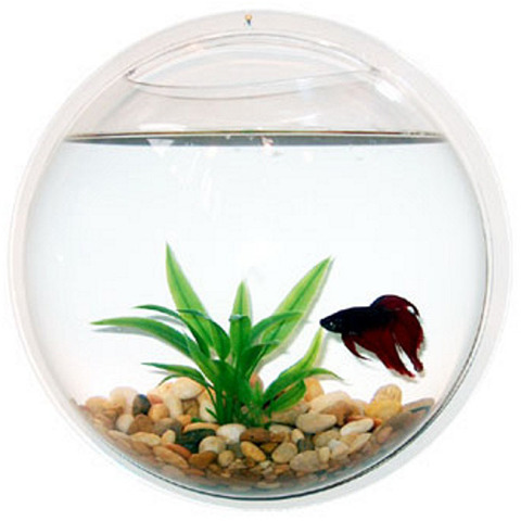 Cool betta fish bowl images galleries for Betta fish bowl ideas