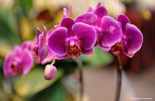 Flower Resurrection Service Delivers Zombie Orchids