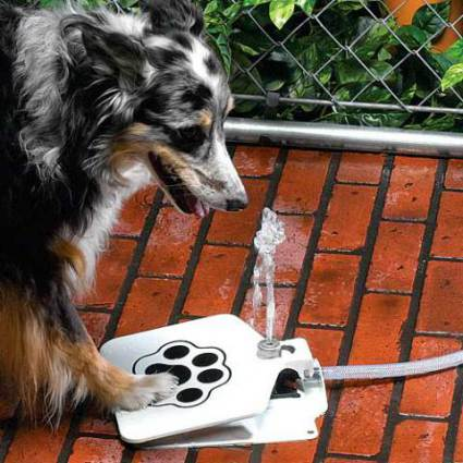 Doggie Fountain™