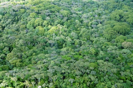 Rainforest tree factories could eliminate rainforest destruction