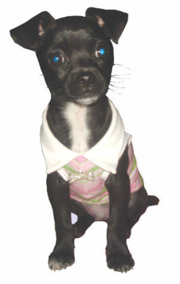 Sleeveless Polo by Hip Doggie