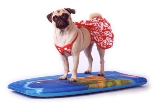 Bath tails dog walking dog walkers in philadelphia yelp dog 10 hilarious dogs in bathing suits because summer rover com solutioingenieria Choice Image