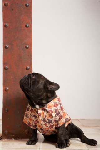 Casual dog shirt by Trendy4Paws: ©Trendy4Paws