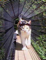 Habitat Haven cat tunnel: ©Habitat Haven