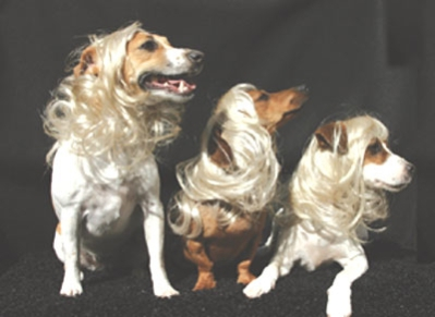Celebutante Wigs by Total Diva Pets