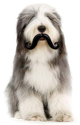 Humanga Stache Dog Toy: via Think Geek