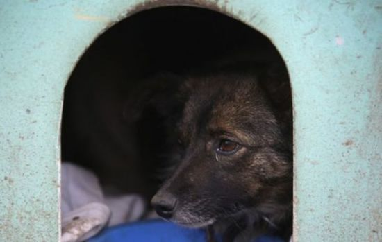 Homeless dog in his doghouse in favela, Caxias do Sul, Brazil: image via acidcow.com