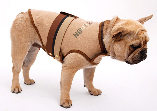 Frenchie Coat by Trendy4Paws: Trendy4Paws
