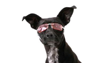 Doggles K-9 Optix
