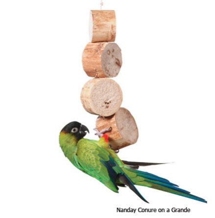 Bird Kabob by Wesco Pet: Kabob for medium-sized birds (conure shown here)