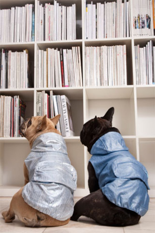 Library dog wear? Trendy4Paws: Trendy4Paws
