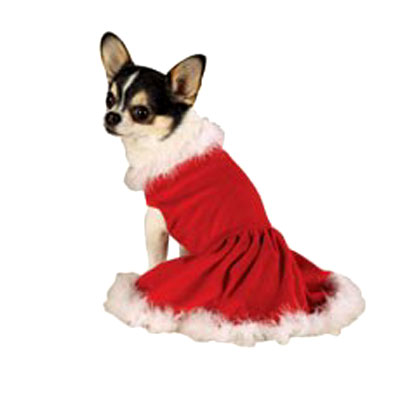 Most Stylish Mrs. Dog Klaus Outfit  sc 1 st  InventorSpot & Holiday Pet Costumes