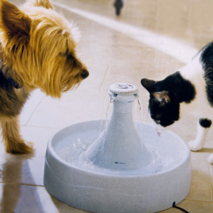 Drinkwell Multipet 360 Pet Fountain