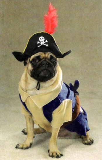 Best Pirate Pet Costume