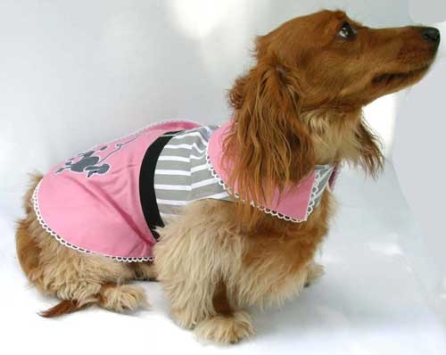Daschund in Poodle Skirt/Harness/Dress