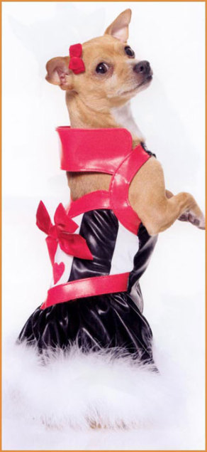 Most Flirtatious Pet Costume