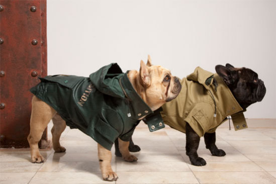 All-weather dog coats by Trendy4Paws: Trendy4Paws