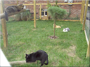 SafeCat DIY catio customer-built: image via just4cats.com