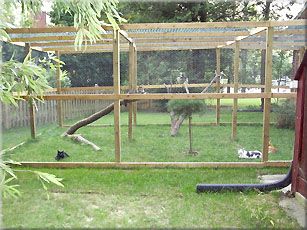 SafeCat DIY catio customer result: @just4cats