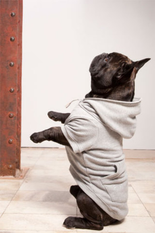 Dog hoodie by Trendy4Paws: Trendy4Paws