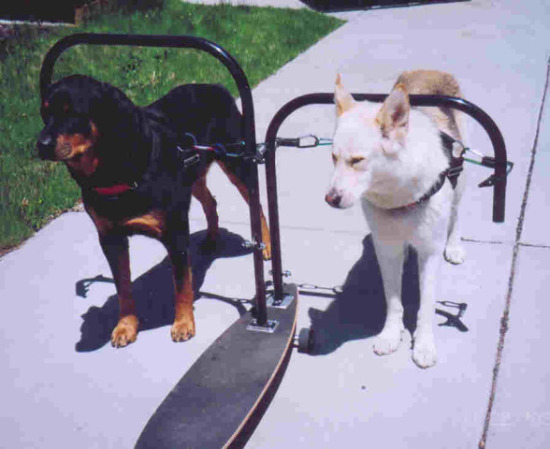 DogPoweredSkateboard