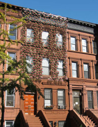 Solar Ivy on brownstones.: ©Solar Ivy