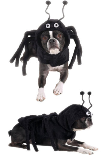 Scariest Pet Costume