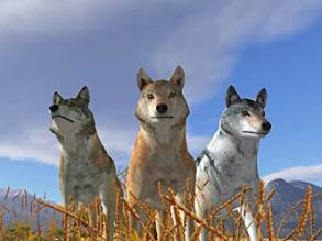 """Wolves of """"Wolf Quest"""""""